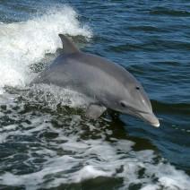 """W Mszczonowie ma powstać delfinarium. Ekolodzy: """"Delfiny nie powinny żyć na lądzie!"""""""