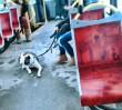 Pies w komunikacji zawsze w kagańcu. Bez względu na wagę i rasę