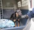 Ktoś związał psa i włożył go w plastikowy worek!