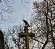 Czesław Kiszczak nie zostanie pochowany na Powązkach