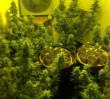 Pożar kontenera z marihuaną!