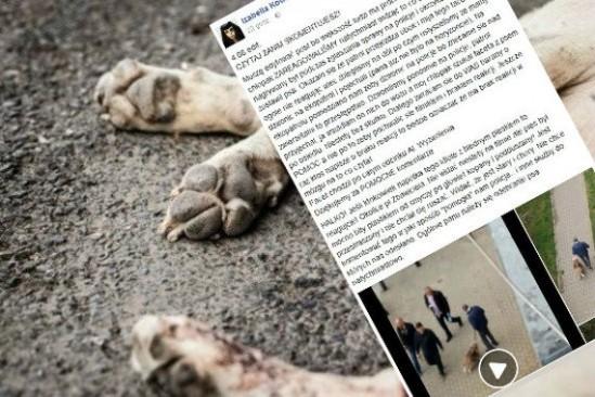 Właściciel znęcał się nad psem Fot. Fotolia/Facebook