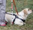 Niewidoma niewpuszczona do busa z psem przewodnikiem. Sąd: przewoźnik ma przeprosić