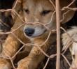 W Warszawie powstanie lokal serwujący psie mięso