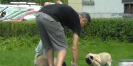 Znany aktor sprząta po swoich psach!