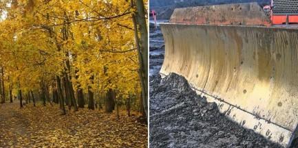 Wytną tysiące drzew na Białołęce. Bez pytania dzielnicy i mieszkańców o zgodę