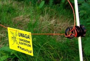 Psy w niebezpieczeństwie - elektryczny pastuch na Ursynowie