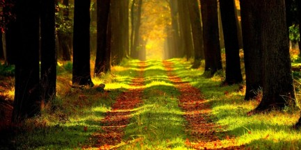 Las Młociński: przez budowę gazociągu wytną 5 tys. drzew. Warszawiacy walczą z inwestorem