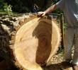 Pogrom drzew nad Zegrzem. Powstanie tu betonowe osiedle