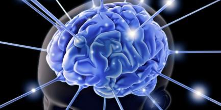 Za darmo: Dzień Mózgu