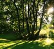W Warszawie jest zielono, czysto i bezpiecznie