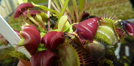 Wystawa Roślin Mięsożernych w Ogrodzie Botanicznym UW