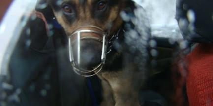 Zostawił psa w aucie na mrozie przy Żwirki i Wigury! [ZDJĘCIA]