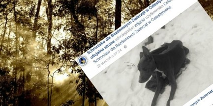 Zostawili umierającą suczkę w lesie. Urzędnicy rozkładają ręce, internauci namierzyli sprawców
