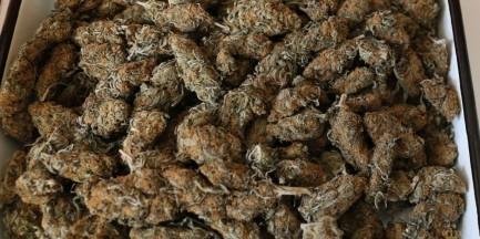 1100 działek marihuany, 390 działek kokainy i próba przekupienia policjantów