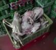 W Wólce nie sprzedawano mięsa z psów! - oburzają się Wietnamczycy