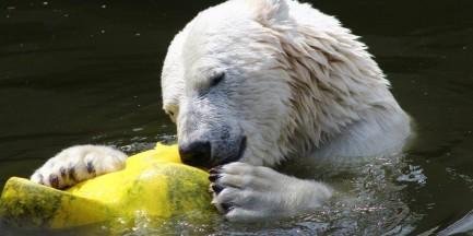 Zwierzęta z ZOO bawią się prezentami od warszawiaków!
